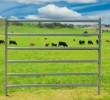 Economy Cattle Panel