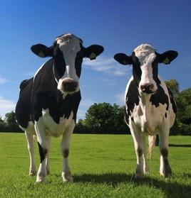 Cattle Handling Equipment
