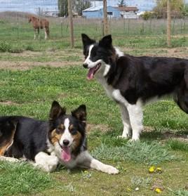 Dog / Puppy