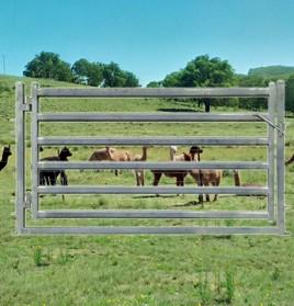 goat-alpaca-gate2100