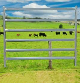 hd-cattle