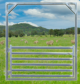 Sheep Yard Gate 2100 High Frame